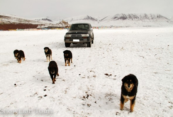 Dogs and Land Cruiser nearby Mt.Everest